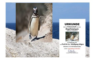 Patenschaft für Pinguin